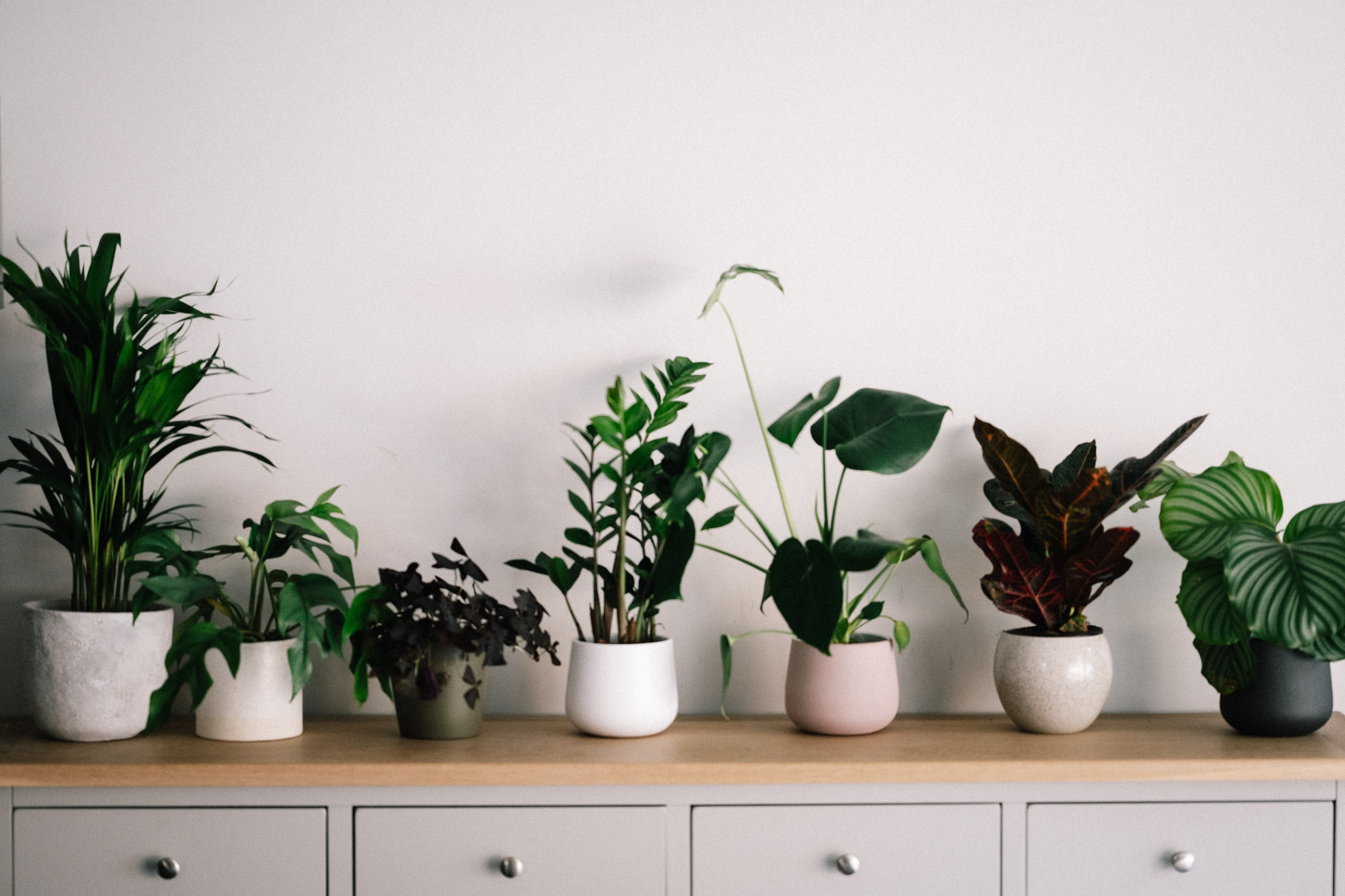 house plant guide
